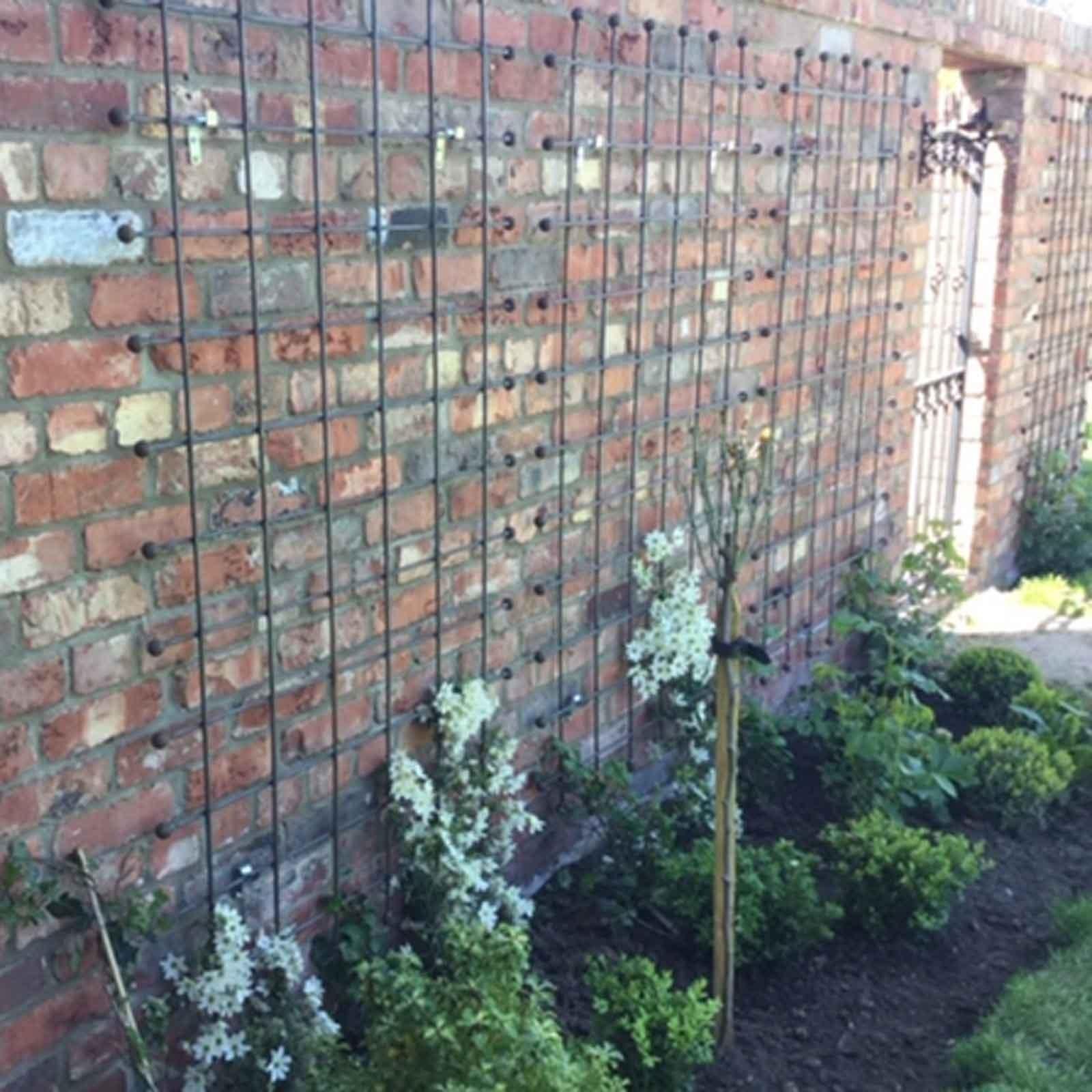 Wall Trellis Ideas: Harrod Horticultural