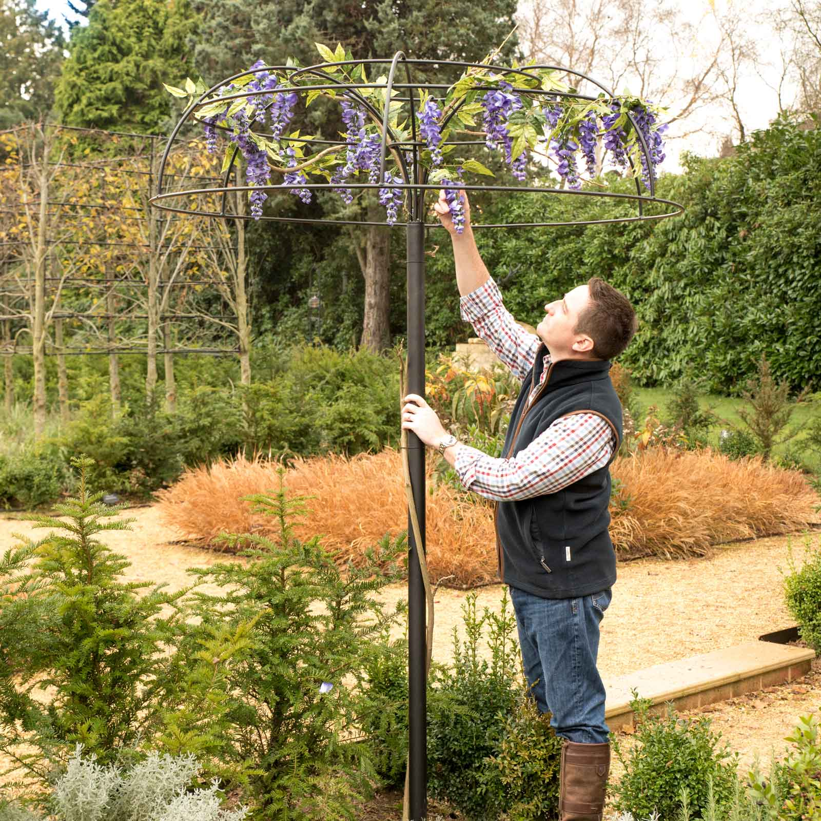Wisteria Umbrella Plant Support Harrod Horticultural