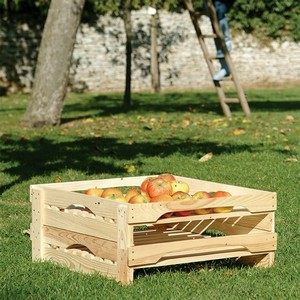 Position The Trays In A Dark, Well Ventilated Place That Has A Moist Atmosphere And A Low Even Temperature To Keep Your Apple Harvest For Weeks. ideal