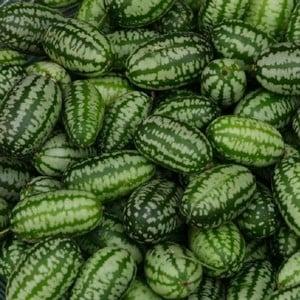 Cucamelon 5 Plants Organic
