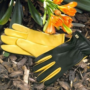 Gold Leaf Dry Touch Gloves