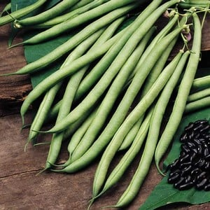 French Climbing Bean Cobra (10 Plants) Organic