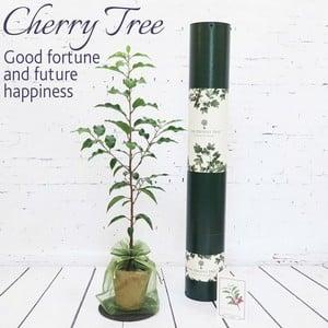 Cherry Tree Gift
