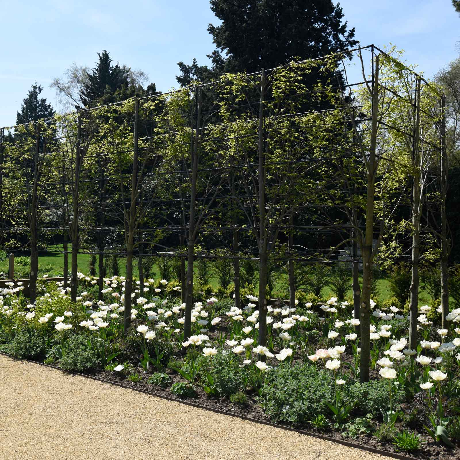 Harrod Pleach Frame Harrod Horticultural