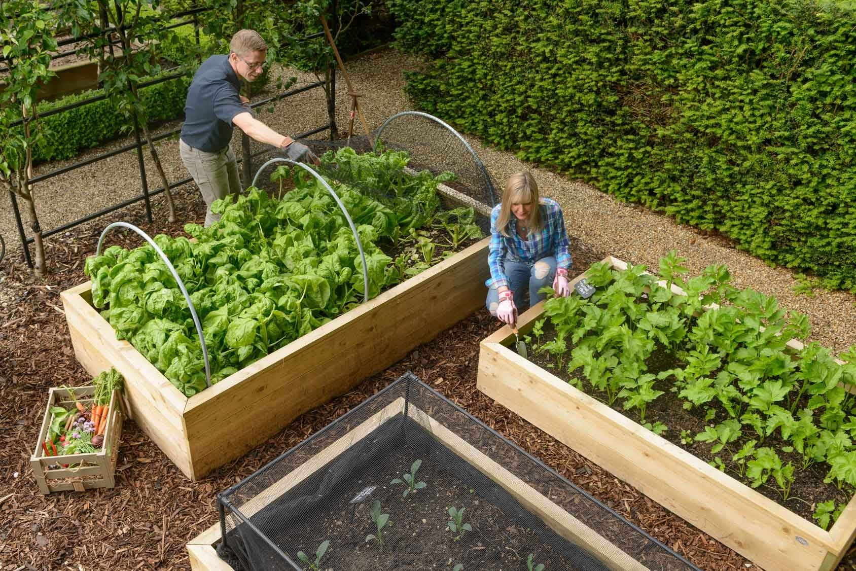Picture of: Standard Wooden Raised Beds Harrod Horticultural