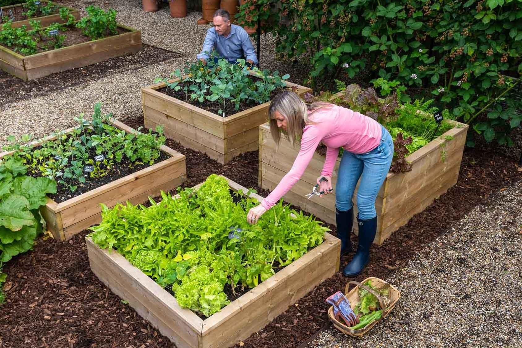 Standard Wooden Raised Beds Harrod Horticultural