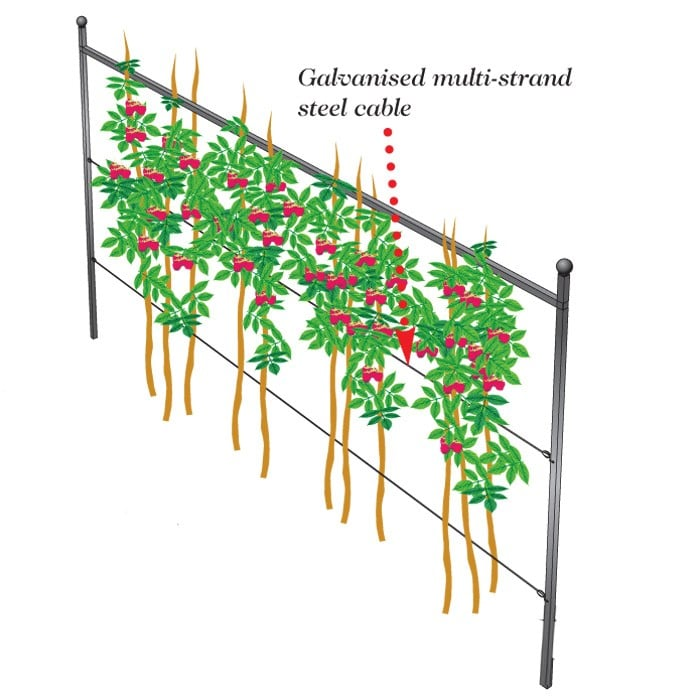 Harrod Summer Raspberry Support Plant Frames By Harrod