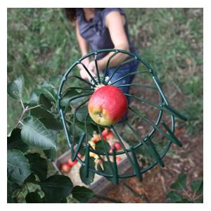This Apple Picker Is Ideal For Picking Those Hard To Reach Apples, Simply Put The Wire Teeth Around The Stem Of The Fruit And Gently Pull Away. The Lo