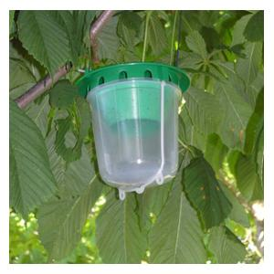 The Horse Chestnut Leaf Miner Trap Helps Preserve That Bastion Of The English Countryside, The Horse Chestnut Tree, From Leaf Miners Which Burrow Into
