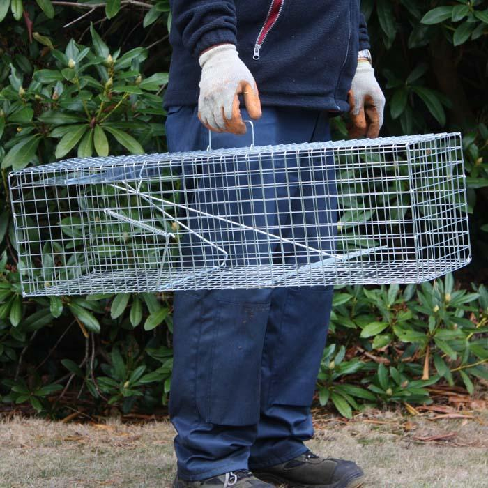 how to set up a rabbit trap
