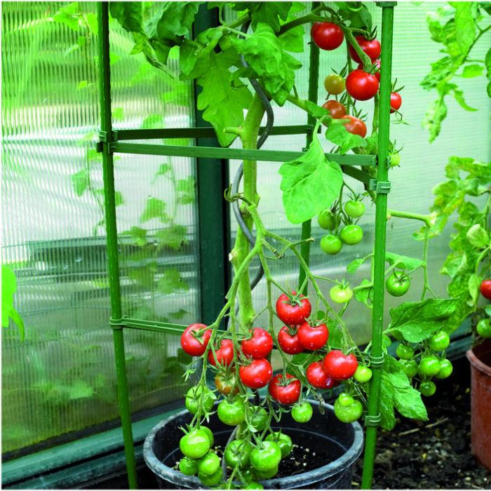 Tomato Cage Plant Support - Harrod Horticultural (UK) on