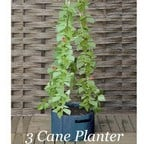 3  Cane Patio Planters (pack of 2)
