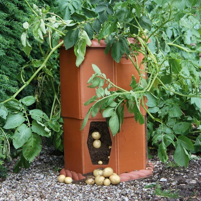 Growing Vegetables In Urban Planters: Harrod Horticultural (UK