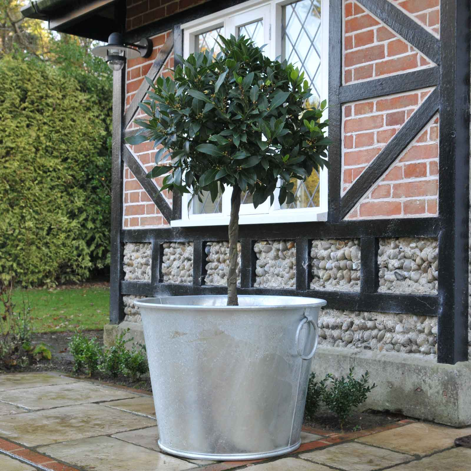 Galvanised Zinc Planters - Garden Supplies at Harrod ... on zinc planter boackround on white, zinc garden statues, zinc bowls, zinc furniture, zinc window boxes,