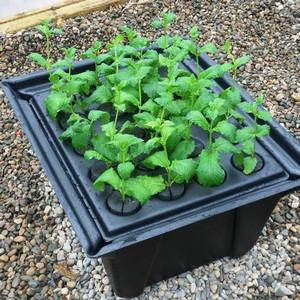 Hydropod Cuttings Propagators