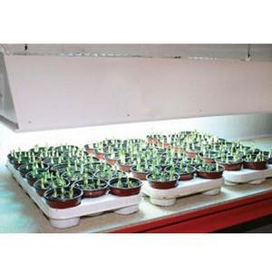 Grow Light Kit (bulb Only)