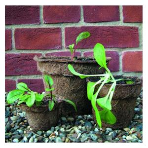 Organic Natural Fibre Pots