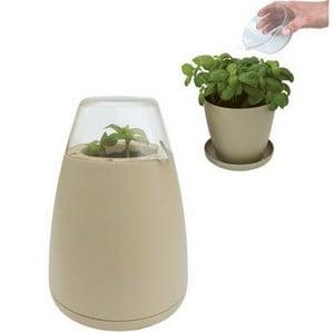 Eco Potagator In Mushroom