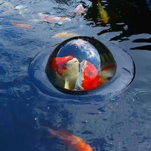 Floating Fish Viewing Sphere