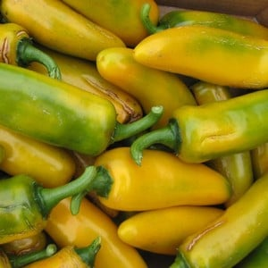 Sweet Pepper Long Yellow Ringo Is A Tasty, Decorative Pepper, Delicious Raw In Salads Or Cooked For Its Lovely Sweet Flavour Making It A Popular Addit