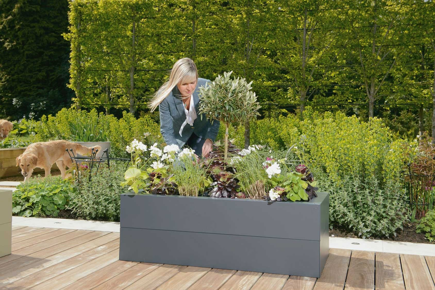 Picture of: Harrod Metal Raised Beds Harrod Horticultural