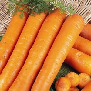 Carrots Early Nantes 20 Plants Organic