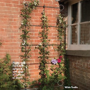 Harrod Build Your Own Node Wall Trellis Gives You Great Flexibilty To Create Your Own Wall Trellis To Perfectly Fit Your Space, Using Solid Steel Bars