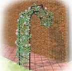 Harrod Ogee Wall Arch