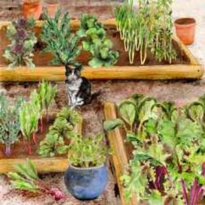 Autumn/winter Vegetable Garden