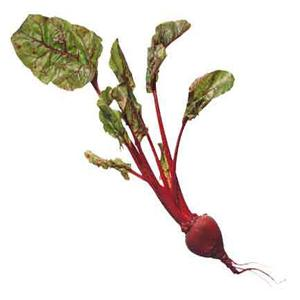 Organic Storuman Beetroot Seeds