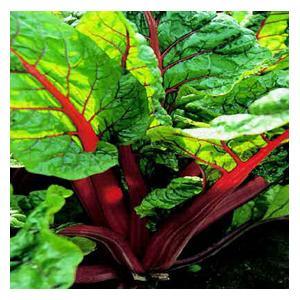 Organic Rhubarb Chard Seeds