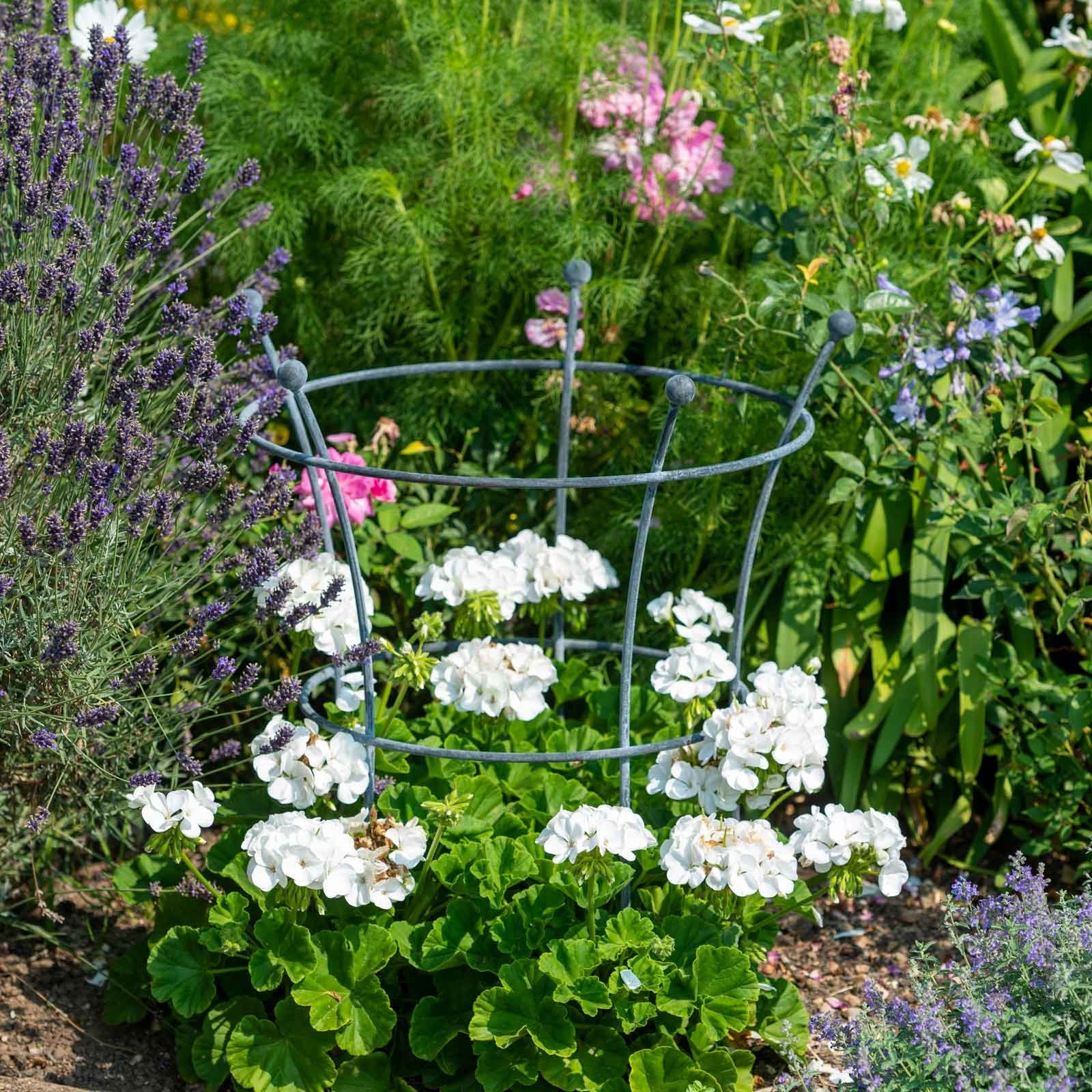 Southwold Trumpet Peony Plant Support