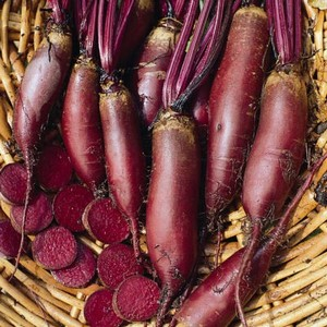 Beetroot Cylindra 10 Plants Organic