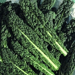 Delivery From Late April Onwardscavolo Nero Is An Italian Kale With Beautiful Dark Green Leaves, You Can Plant In The Vegetable Patch Or Just In The B