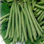 Dwarf French Green Beans (10 Plants) Organic