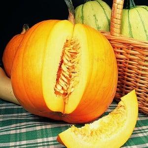 Pumpkins Jack O'lantern (5 Plants) Organic