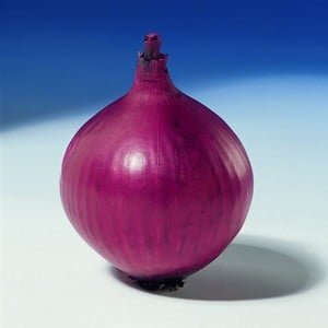 Delivery From Late April Onwardsthe Red Baron Variety Of Red Onion Will Produce Firm, Flattish-round Bulbs Of A Beautiful Dark Red Colour. An Excellen
