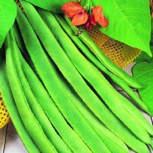 Runner Beans Enorma (10 Plants) Organic