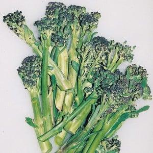 Summer Purple Sprouting Broccoli (10 Plants) Organic