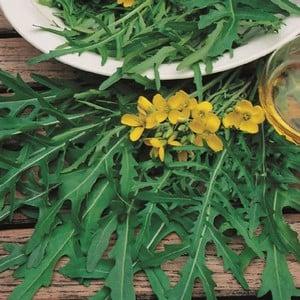 Wild Rocket (10 Plants) Organic