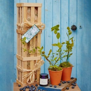 Blueberry Plants and Jam Gardeners Gift Set