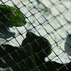 Butterfly Netting Rigid Plastic Mesh