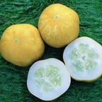 Cucumber Crystal Lemon (5 plants Organic