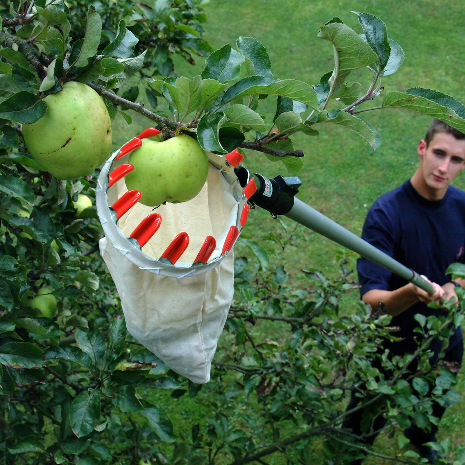 Fruit Picker Basket Amp Handle Harrod Horticultural Uk