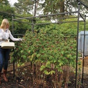 Harrod Autumn Raspberry Support