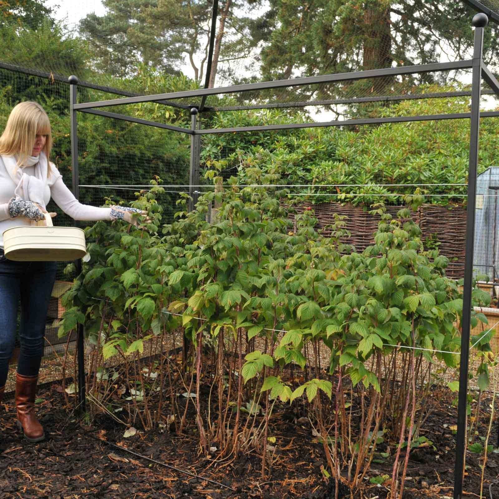 Autumn Raspberry Support Frames Harrod Horticultural