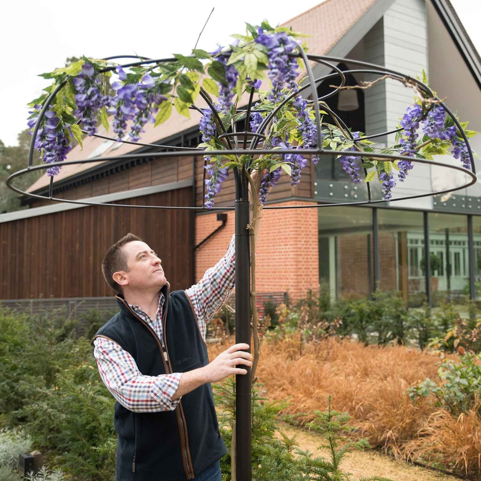 Wisteria Umbrella Plant Support
