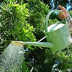 Haws 5ltr Watering Can (Pea Green)