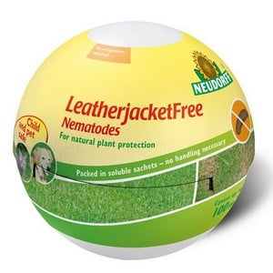 LeatherjacketFree Nematodes