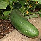 Organic Cucumber Marketmore Seeds